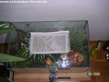 schnecken forum thema anzeigen deckel f r terrarium. Black Bedroom Furniture Sets. Home Design Ideas